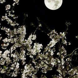 荒川区の夜を遊ぶ:第3回 大切な人と夜桜をたのしむ