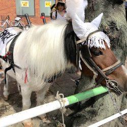 馬と人の新しい生き方を荒川区から 第2回すとりぃとふぇす特集#2 うまステーション