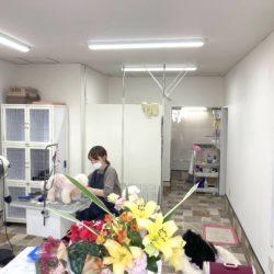 【開店】日暮里七五三通りにドッグサロン シェリーがオープン